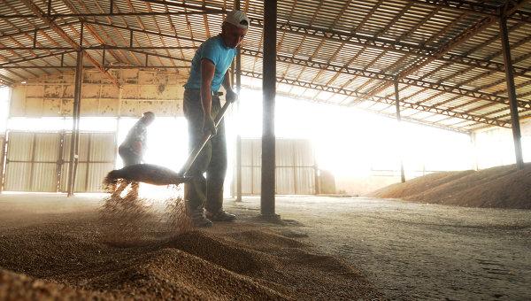 Хлеборобы Татарстана собрали более 2 млн тонн зерна