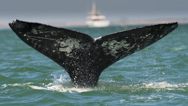 Xвост серого кита. Архив