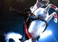 Цирковой спектакль Zorro Viva!