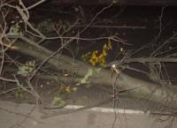 Сильный ветер повалил деревья. Архив.