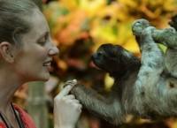 Ленивец в заповеднике в Коста-Рике