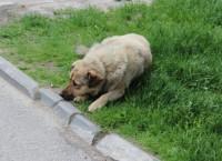 Бездомная собака. Архив