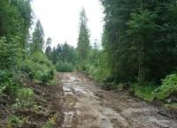 Лес. Ленинградская область