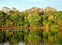 Амазония. Архив