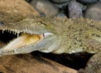 Крокодил. Архив
