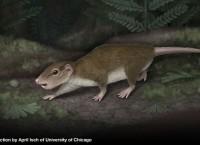 Древнее млекопитающее Rugosodon eurasiaticus в представлении художника