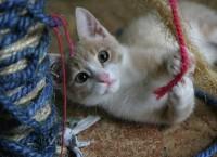 Приют для бездомных животных под Новосибирском