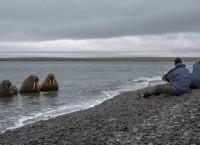 Арктическая экспедиция WWF в море Лаптевых