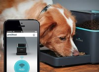 Pintofeed – электрическая кормушка для домашних животных