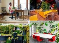 Потрясающие варианты озеленения офисного пространства
