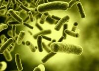 Бактерии E.coli